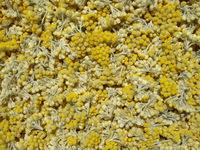 Garrigue Gourmande Immortelle Helichrysum D Italie